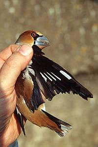 images oiseaux de la nature